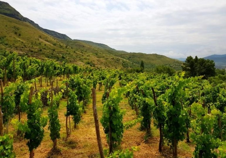 Export Of Wines From Republic Of Georgia To U.S. On The Rise