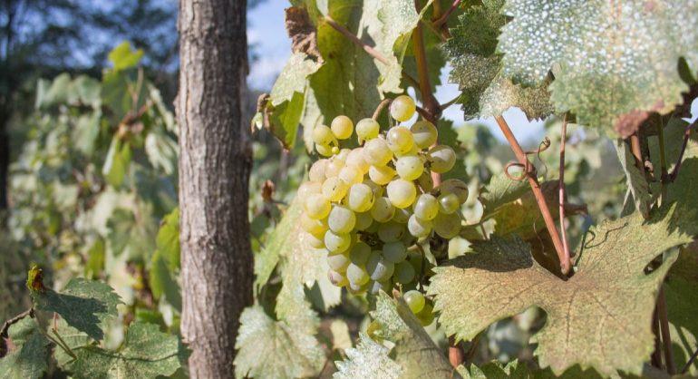 Top 10 Exporters Of Georgian Wine
