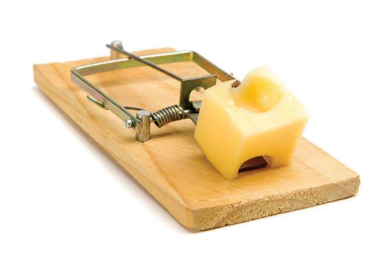 როდესაც ყველი მხოლოდ ხაფანგშია