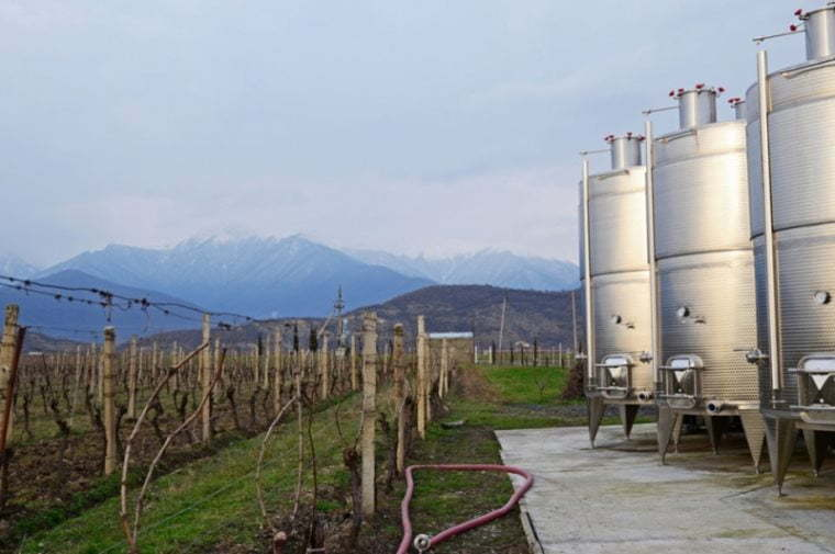 Georgian wine export grows