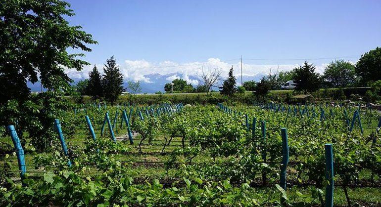 Forbes: რატომ არის ქართული ღვინო მსოფლიოში ერთ-ერთი ყველაზე უნიკალური