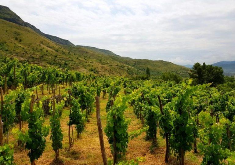 Forbes: ქართული ღვინის ექსპორტი ამერიკაში იზრდება