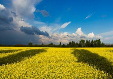 უკრაინა EU-ში სოფლის მეურნეობის პროდუქციის ექსპორტით ტოპ-5 ქვეყანას შორისაა