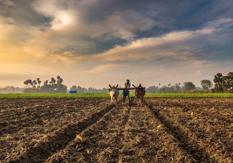 კვლევის მიხედვით, ფერმებში 1 მილიარდი ტონა საკვები ფუჭდება